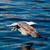 jovem · gaivota · caminhada · animal · ao · ar · livre - foto stock © digoarpi