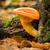 森林 · キノコ · 苔 · 食品 · 夏 · 赤 - ストックフォト © digoarpi