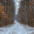 snowy winter road in the forest stock photo © digoarpi