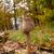 güneş · şemsiyesi · mantar · 18 · ahşap · orman · bitki - stok fotoğraf © digoarpi