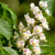 春 · 小枝 · 馬 · 栗 · ツリー · 小さな - ストックフォト © digoarpi