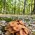 はちみつ · 菌 · 新鮮な · 森林 · 自然 · 風景 - ストックフォト © digoarpi