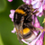 arbusto · belo · flor · folha · jardim - foto stock © digoarpi