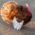 turkey stock photo © digoarpi