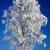 alleen · berk · boom · meer · landschap - stockfoto © digoarpi