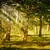 foresta · alberi · fogliame · estate · panorama · verde - foto d'archivio © digoarpi