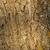 fissuré · arbre · bois · brun · nature · design - photo stock © digoarpi