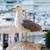 gaivota · azul · natureza · mar · fundo · pássaro - foto stock © digoarpi
