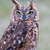 closeup of long eared owl stock photo © digoarpi