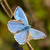 azul · borboleta · pequeno · família · natureza · verde - foto stock © digoarpi