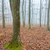 мистик · туманный · день · дуб · лес · природы - Сток-фото © digoarpi