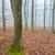 forêt · arbre · herbe · nature · paysage · arbres - photo stock © digoarpi