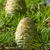cones stock photo © digoarpi