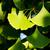 foglie · sani · fotografia · nessuno · orizzontale · sfondo · bianco - foto d'archivio © digoarpi