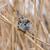 serçe · bahar · doğa · dünya · yeşil · portre - stok fotoğraf © digoarpi