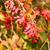 bokor · díszítő · kert · közelkép · virág · tavasz - stock fotó © digoarpi