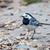 branco · ninho · edifício · pássaro · ramo · holandês - foto stock © digoarpi
