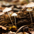 菌 · 美しい · 森林 · キノコ · 苔 · 木材 - ストックフォト © digoarpi