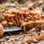 黄色 · 菌 · ツリー · 美しい · シェルフ · 樹皮 - ストックフォト © digoarpi
