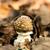 菌 · 小さな · 森林 · 緑 · 死 - ストックフォト © digoarpi