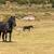 konie · krajobraz · Błękitne · niebo · wiosną · trawy - zdjęcia stock © digoarpi