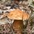 boletos · outono · floresta · chuva · gotas · comida - foto stock © digoarpi
