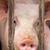 fiatal · disznó · farm · profil · kilátás · szín - stock fotó © digoarpi
