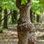 erdő · napfény · fényes · erős · zöld · fa - stock fotó © digoarpi