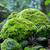 gyönyörű · öreg · fák · mocsár · víz · tavasz - stock fotó © digoarpi