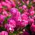 bloemen · steeg · witte · bloem · hond - stockfoto © digoarpi
