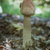 gomba · kapszula · közelkép · étel · egészség · háttér - stock fotó © digoarpi
