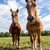 kettő · lovak · testtartás · közelkép · kilátás · fű - stock fotó © digoarpi