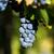 влажный · виноград · из · воды · текстуры · фон - Сток-фото © digoarpi
