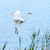 blanco · vuelo · agua · cielo · naturaleza · mar - foto stock © digoarpi