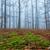 мистик · дуб · лес · дерево · природы · пейзаж - Сток-фото © digoarpi