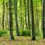落葉性の · 森林 · 日照 · 太陽光線 · 霧の · 夏 - ストックフォト © digoarpi