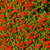 vermelho · jardim · flores · primavera · natureza · folha - foto stock © digoarpi