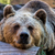bruine · beer · witte · beer · witte · achtergrond · zoogdier · wild - stockfoto © digoarpi