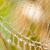 preto · e · branco · aranha · verde · natureza · floresta · jardim - foto stock © digoarpi