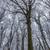 лес · морозный · зима · день · Солнечный · утра - Сток-фото © digoarpi