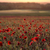 veld · klaprozen · zonsopgang · agrarisch · landschap · hemel - stockfoto © digoarpi