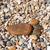 шаг · камней · изображение · океана · пляж · воды - Сток-фото © dinozzaver