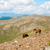 gyönyörű · ló · hegyek · sétál · fű · szépség - stock fotó © dinozzaver