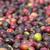 свежие · кофе · красный · фон · сельского · хозяйства - Сток-фото © dinozzaver