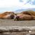costa · Noruega · playa · paisaje · cuerpo · nieve - foto stock © dinozzaver