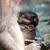 обезьяны · каменные · Blue · Sky · Таиланд · ребенка · глазах - Сток-фото © dinozzaver
