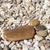 каменные · ногу · пляж · печать · камней · текстуры - Сток-фото © dinozzaver