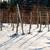 wijngaard · winter · gedekt · sneeuw · natuur · veld - stockfoto © dinozzaver