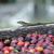 frescos · café · rojo · fondo · agricultura - foto stock © dinozzaver