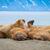 海岸 · ノルウェー · ビーチ · 風景 · ボディ · 雪 - ストックフォト © dinozzaver